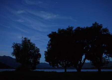 wanaka-nite-tree